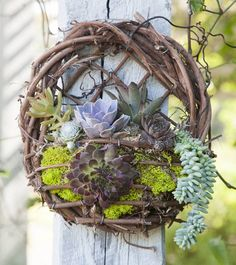 Exotic Grapevine Wall Basket.Our charming hand-made grapevine wall basket is filled with a mixture of Exotic Succulents.  Display in the garden, by an entryway or any  bright indoor location. Very easy to care for just dip the bottom half of the basket in a tub of water about once a week. Allow  ...