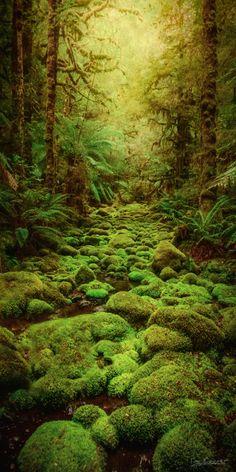 Hidden Passage - Moss covered riverbed, takanya/Tarkine, Tasmania, by Tim Cooper ... #landscape #forest #nature #river #australia #moss #tasmania