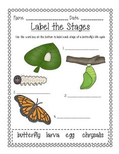 Butterfly Life Cycles: Label the pictures