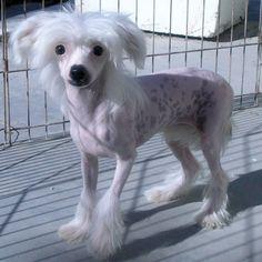 puppy & Dog - Google Search | ANIMALS | Pinterest | Beautiful ...