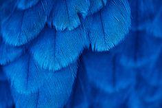 7240x4826 Plume En Gros Plan Bleu Fond Decran Telecharger Photo