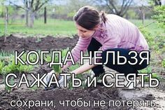 КОГДА НЕЛЬЗЯ САЖАТЬ и СЕЯТЬ Народные приметы для садоводов-огородников! - Картофель нельзя сажать на Вербной неделе, по средам и субботам - будет портиться. - Если весна ранняя, то капусту, как и лук сеют на четвертой неделе Великого поста или позже - на пятой. - Если весна запаздывает, то производят посев в последние дни Страстной недели, особенно в субботу. - Подсолнухи лучше сажать в субботу, до восхода солнца или после его захода. Последнее предпочтительнее. При посадке молчат и не…