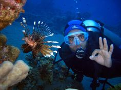 Enjoy your time here in a truly fun & friendly environment. #Dive with us @greenwichdiving.com. #bucear #buceo