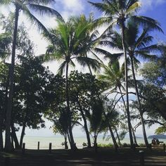 Palm Cove today right now........who is up for a swim and then a cocktail by the pool?www.palmcovebeachfront.com.au #palmcove Pic zev #exploretnq