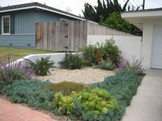 "Drought Tolerant Landscaping Plans | Lose The Lawn"" - Drought Tolerant Landscape Design"