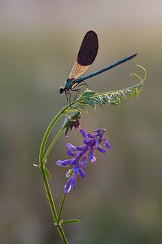 Damselflies signify speed, grace, and the element of air.