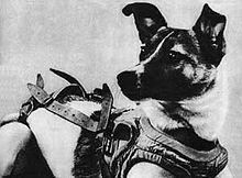 Laika (Soviet dog in Space) - I'm both amazed & horrified by this Wikipedia article...