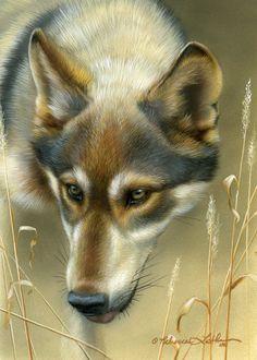 Rebecca Latham Wolves | wolf182010-731x1024.jpg