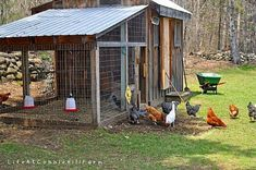We knew we wanted to build a new, larger coop and run, and had hoped to do so prior to bringing chickens home. Description from lifeatcobblehillfarm.com. I searched for this on bing.com/images