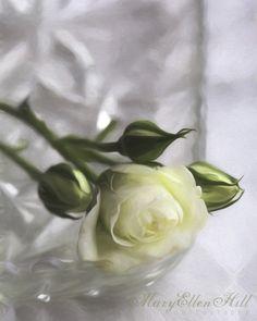 Rose on cut glass.