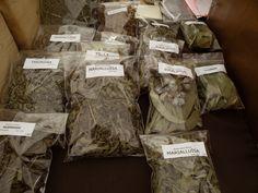 Les herbes medicinals de la Dolors. A nosaltres ens ha solucionat els nervis i les migranyes!