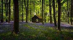 Woodland Trust photography competition 2013: 'A cabin in bluebell woods' in Hampshire, by Ashley Chaplin, won in the overall and ancient woods and modern wonders category
