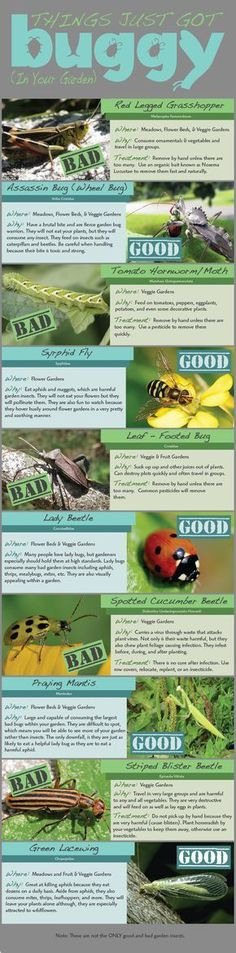 Which Bugs are Good and Bad for Your Garden? Read This Now to Find Out! http://homeandgardenamerica.com/good-and-bad-bugs-for-your-garden