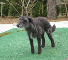 Deerhound -GourmetFelted -Eastham, MA -Etsy -Gerry