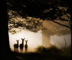 Dear deer on an autumn morning.