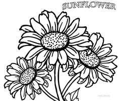 Sunflower Patch Coloring Page Worksheets Sunflowers and