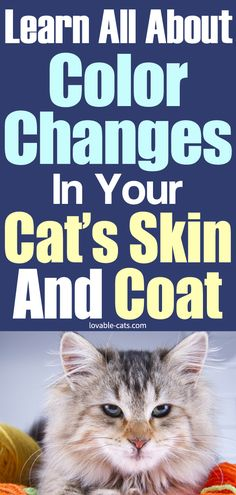 Learn All About Color Changes in Your Cat's Skin and Coat Beautiful Cats, Animals Beautiful, Cute Animals, Cat Skin, Cat Toilet Training, Animal Projects, Funny Animal Videos, Color Change, Animal Pictures