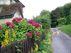 UK roadside garden