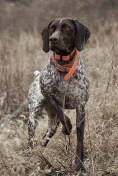 grouse hunting ..(M McKenzie)...For cash back savings on pet supplies stores visit www.dubli.com/M04VB