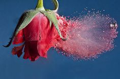 Alan Sailer shoots bullets through small, inanimate objects, then captures it with precise high speed photography