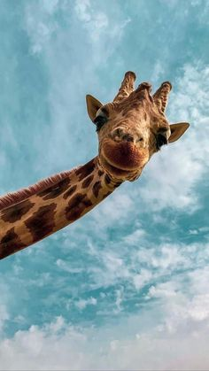 The giraffe is one of the animals with the longest neck, it is longer than that of a bear. It's a interesting animal, it's so large and tall. Always it's yellow with brown spots. Baby Animals Super Cute, Cute Little Animals, Cute Funny Animals, Cute Dogs, Baby Animals Pictures, Cute Animal Pictures, Animals And Pets, Smiling Animals, Cute Wallpaper Backgrounds