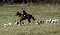 Hunting season opens: Incredible pictures document a traditional part of British country life British Country, English Country Style, Country Life, Fox Hunting, Hunting Season, My Ride, Equestrian, Deer, The Incredibles