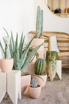 Grouped cactus ideas + things you should know - House Plants Decoration Cactus, Decoration Plante, Cacti And Succulents, Potted Plants, Indoor Plants, Foliage Plants, Cactus E Suculentas, Deco Nature, Deco Floral