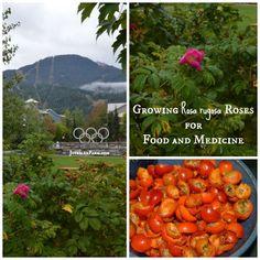 Grow Roses for food and medicine! Grow Roses for food and medicin… Organic Gardening, Gardening Tips, Indoor Gardening, Diy Herb Garden, Garden Ideas, Wild Edibles, Medicinal Herbs, Permaculture, Herbalism