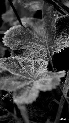 Kipakka kipinöi, kuvaa ja kutoo Dandelion, Flowers, Plants, Floral, Plant, Taraxacum Officinale, Royal Icing Flowers, Dandelions, Florals