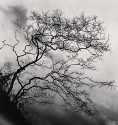 Temple Trees, Nara, Honshu, Japan, 2002, by Michael Kenna.