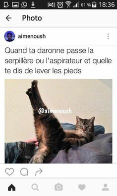 Quand elle passe la serpillère.. Funny Animal Pictures, Funny Animals, Funny Cute, Hilarious, Rage, Good Morning Funny, Lol, Funny Posts, I Laughed