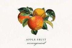 Fruit Clipart, Fruit Illustration, Apple Fruit, Clip Art, You Used Me, Fruit Arrangements, New Clip, Frame Wreath, No Response