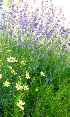 Wife, Mother, Gardener: Driveway Garden at the end of June