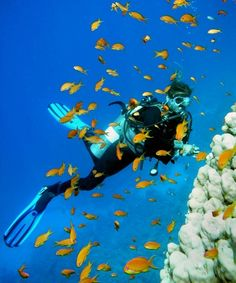 Photo about Woman Scuba Diver and school of Fish. Image of background, alive, divers - 5444375 Learn To Scuba Dive, Best Scuba Diving, Scuba Diving Magazine, Diving School, Reef Shark, Tropical, Island Resort, Snorkeling, Under The Sea