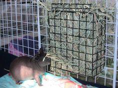 bird feeder as a hay rack