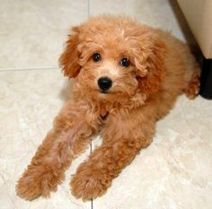 <b>I think we all agree that bouffant poodle cuts are ridiculous.</b> But it