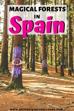 Check these magical forests in Spain! Nature lovers - these 3 places definitely have some magic in the air! Who said the enchanted forests don´t exist in real life? Europe On A Budget, Travel Tips For Europe, Top Travel Destinations, Backpacking Europe, Travel Plan, Spain Travel, France Travel, Italy Travel, Magical Forest