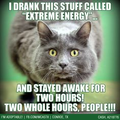 Extreme Energy - cat style. -_- #cats ADOPTED!!!