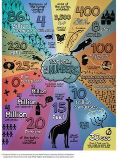 Your Brain by the Numbers - Grafiken / Bilder zum Thema Brain, Rechte/Linke Gehirnhälften und HBDIQuelle: http://www.scientificamerican.com/article/mind-in-pictures-your-brain-by-the-numbers/