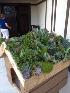Succulent dog house roof!!