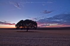 Final de tarde na planície Alentejana by Bruno  Palma on 500px