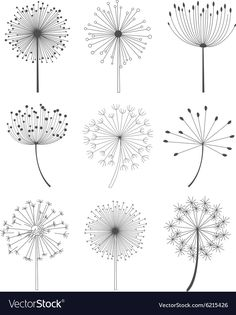 Black and White Dandelions Set vector image on VectorStock Dandelion Drawing, Dandelion Art, Doodle Drawings, Doodle Art, Embroidery Stitches, Embroidery Patterns, Flower Doodles, Bullet Journal Ideas Pages, Painted Rocks