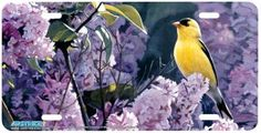 Gold on purple Novelty License Plates, Bird, Purple, Animals, Animales, Animaux, Birds, Animal, Animais