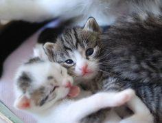 A Fuzzy Purry Hug