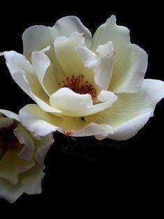 Rose by Christine Craig from La lavande cake boutique