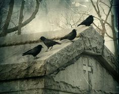 Gothic Crows Gray Hues Raven Photograph Watchin by gothicrow Crow Art, Raven Art, Black Feathers, Bird Feathers, Counting Crows, Quoth The Raven, Jackdaw, Crows Ravens, She Wolf
