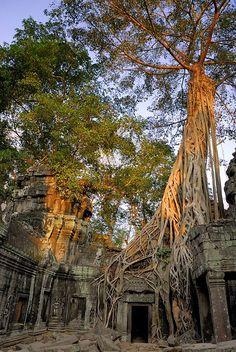 Strangler fig, Ta Prohm, Angkor