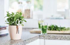 Dla kompletnie zielonych – warzywa łatwe w uprawie, Brussel herbs in kitchen