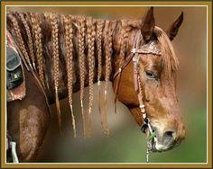 STRANGE HORSE MANE - CORN ROWS!