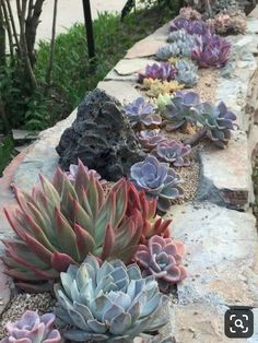 Ideas For Creating Amazing Garden Succulent Landscaping 05 - garden landscaping Succulent Rock Garden, Succulent Landscaping, Succulent Gardening, Backyard Landscaping, Garden Plants, Landscaping Ideas, Flower Gardening, Indoor Gardening, Backyard Ideas